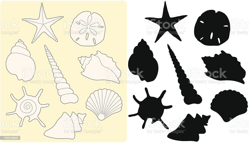 Seashell Drawing vector art illustration
