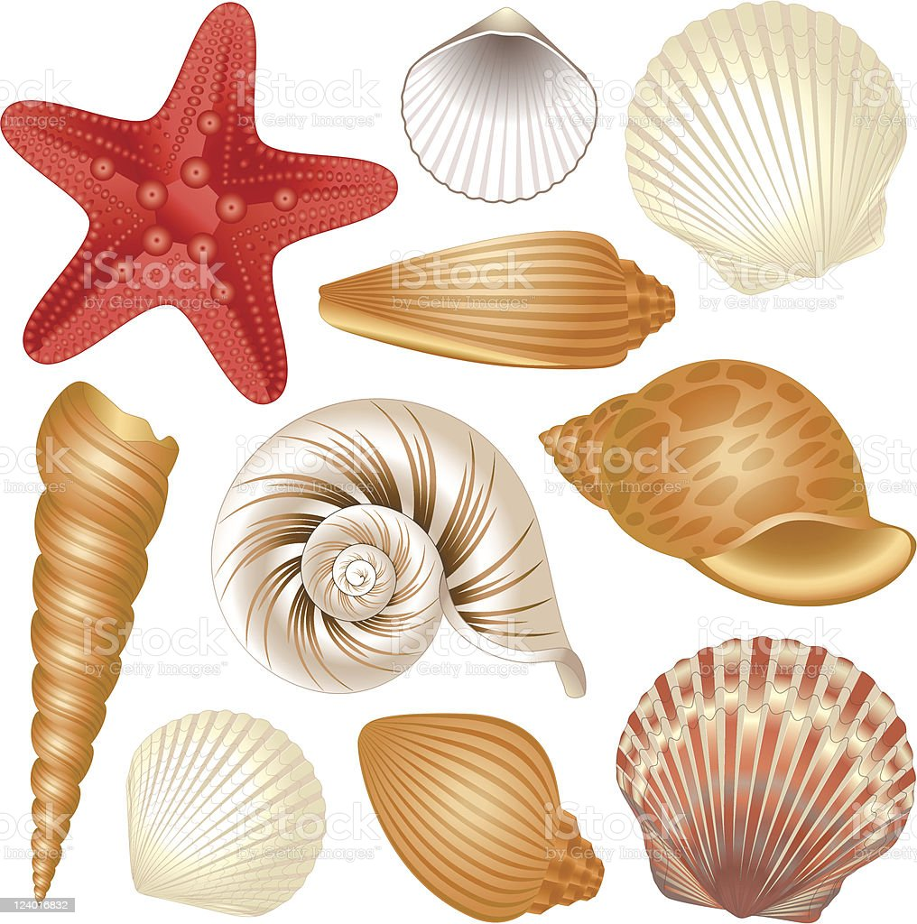 Seashells collection vector art illustration