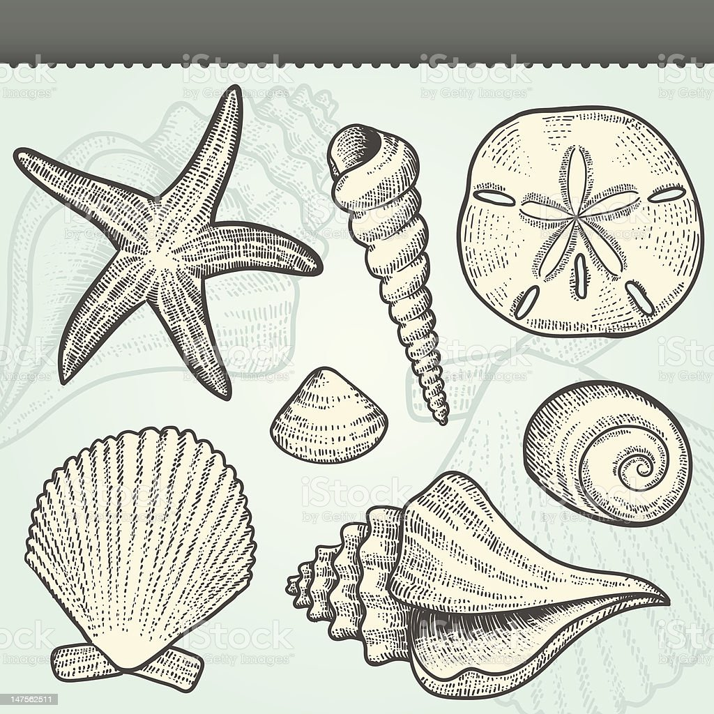 Seashells Craft Vintage Vector Elements Set vector art illustration