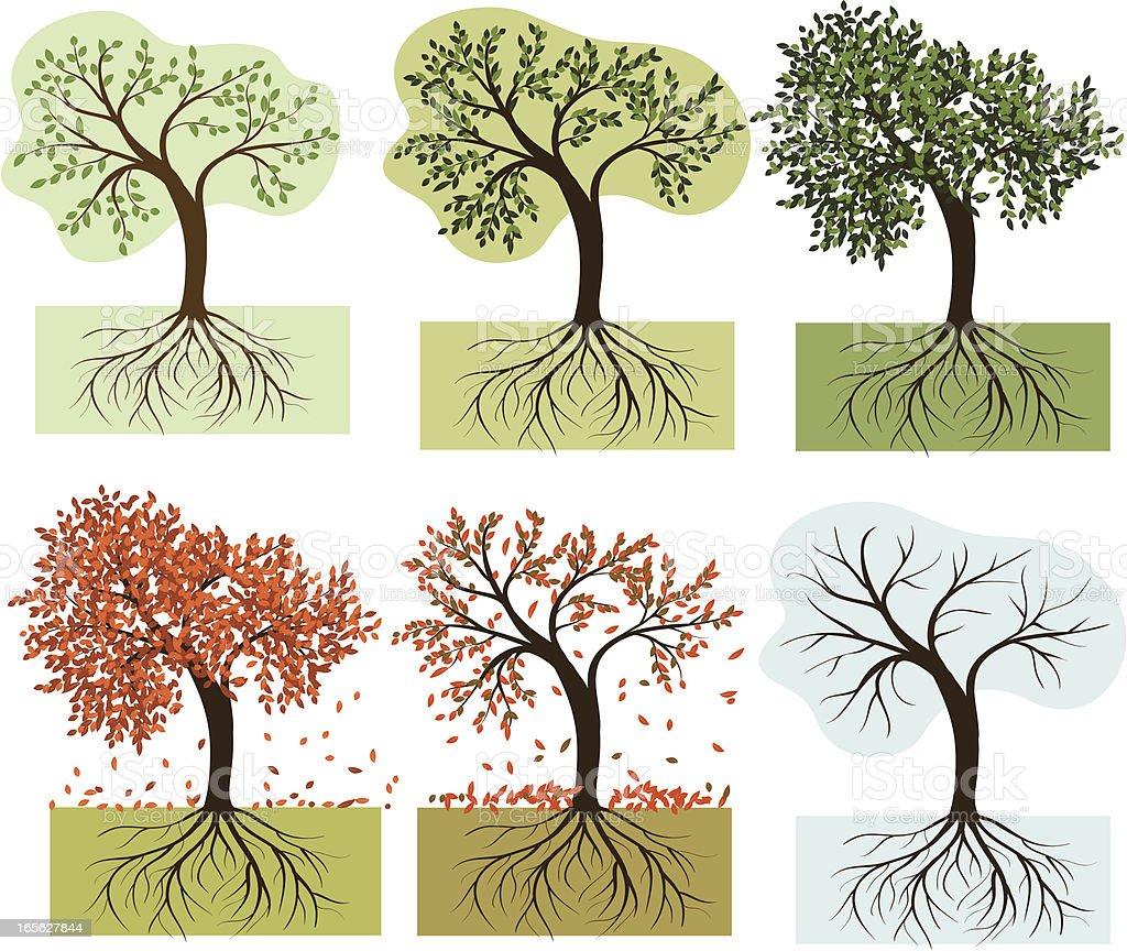 Seasonal trees royalty-free stock vector art