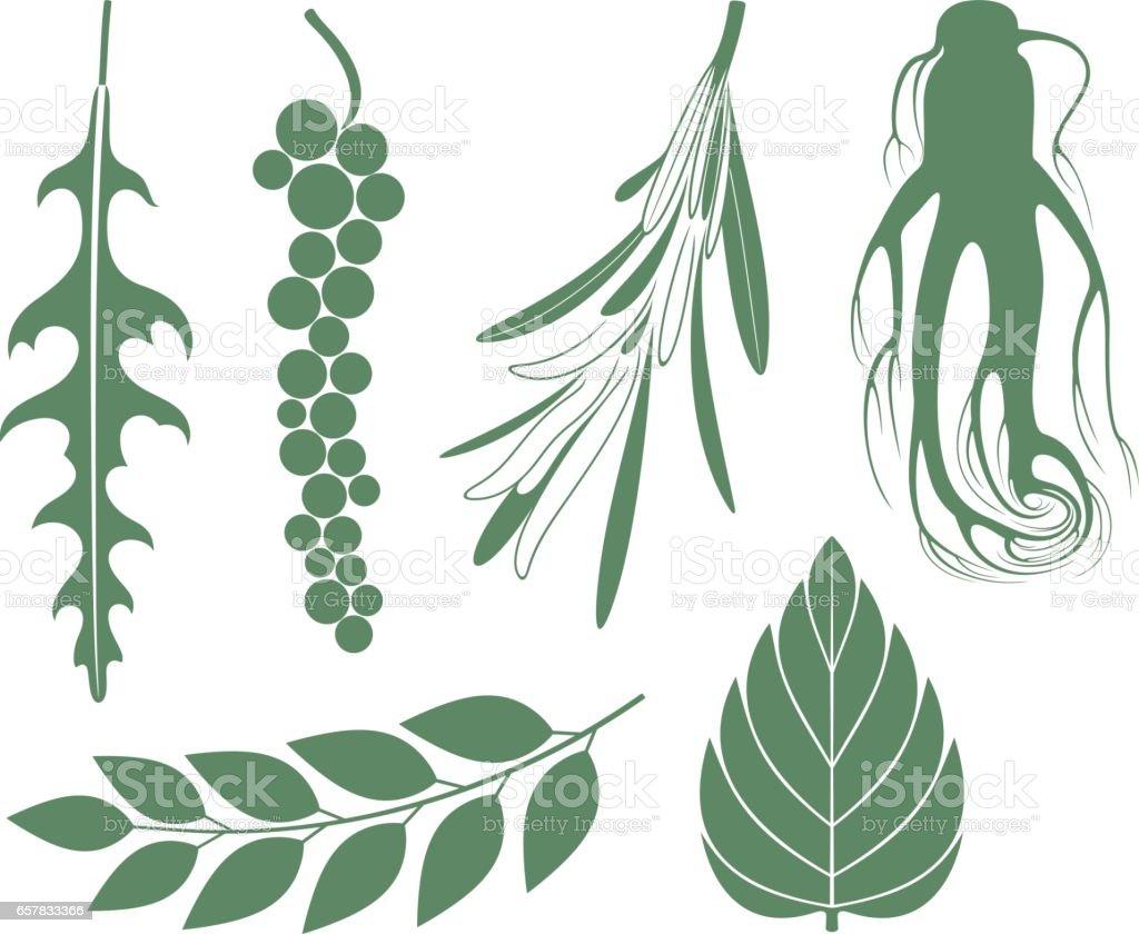 Seasoning vector art illustration