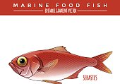 Sebastes. Marine Food Fish