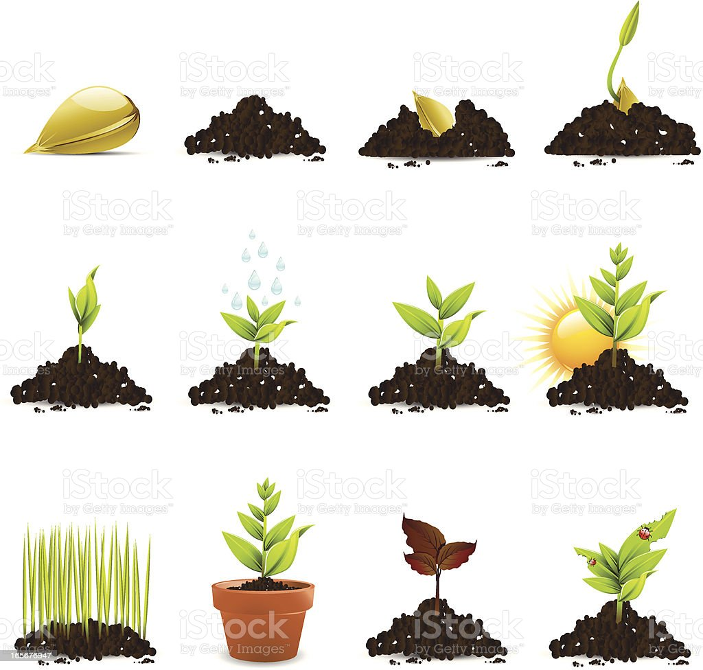 Seed and Plant Growth Icons vector art illustration