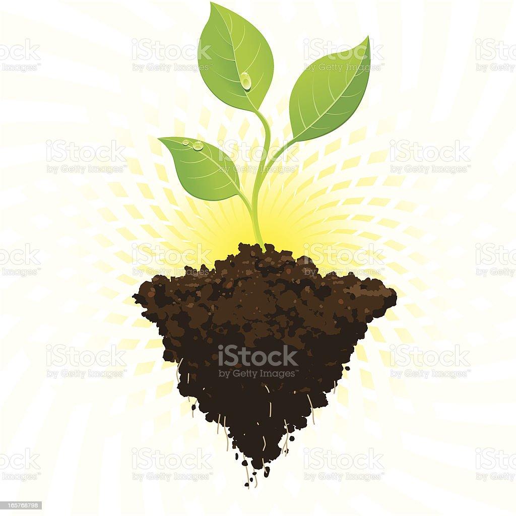 Seedling growth with sunburst vector art illustration
