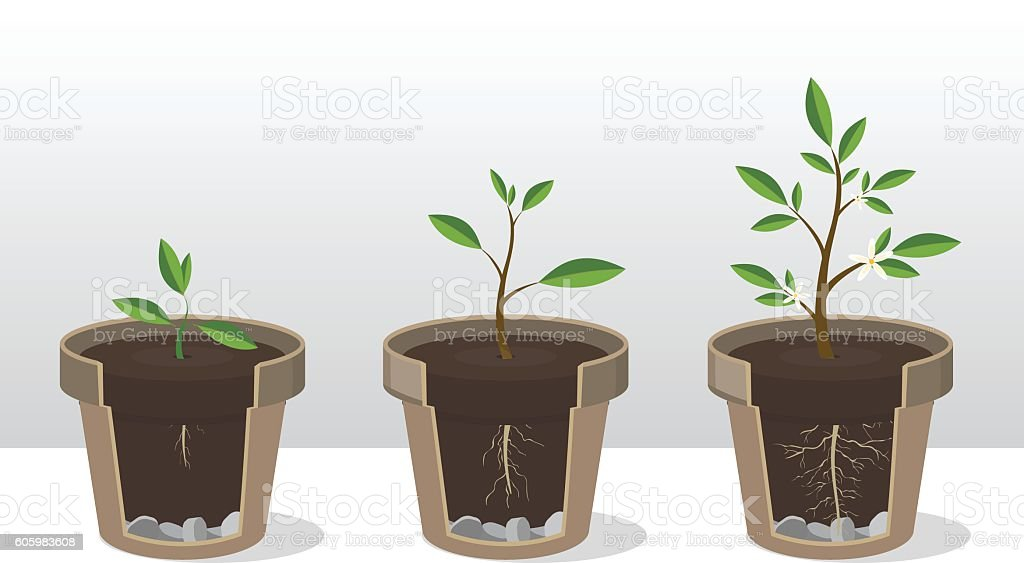 Seedling. Phases of growth of a plant in flowerpot vector art illustration