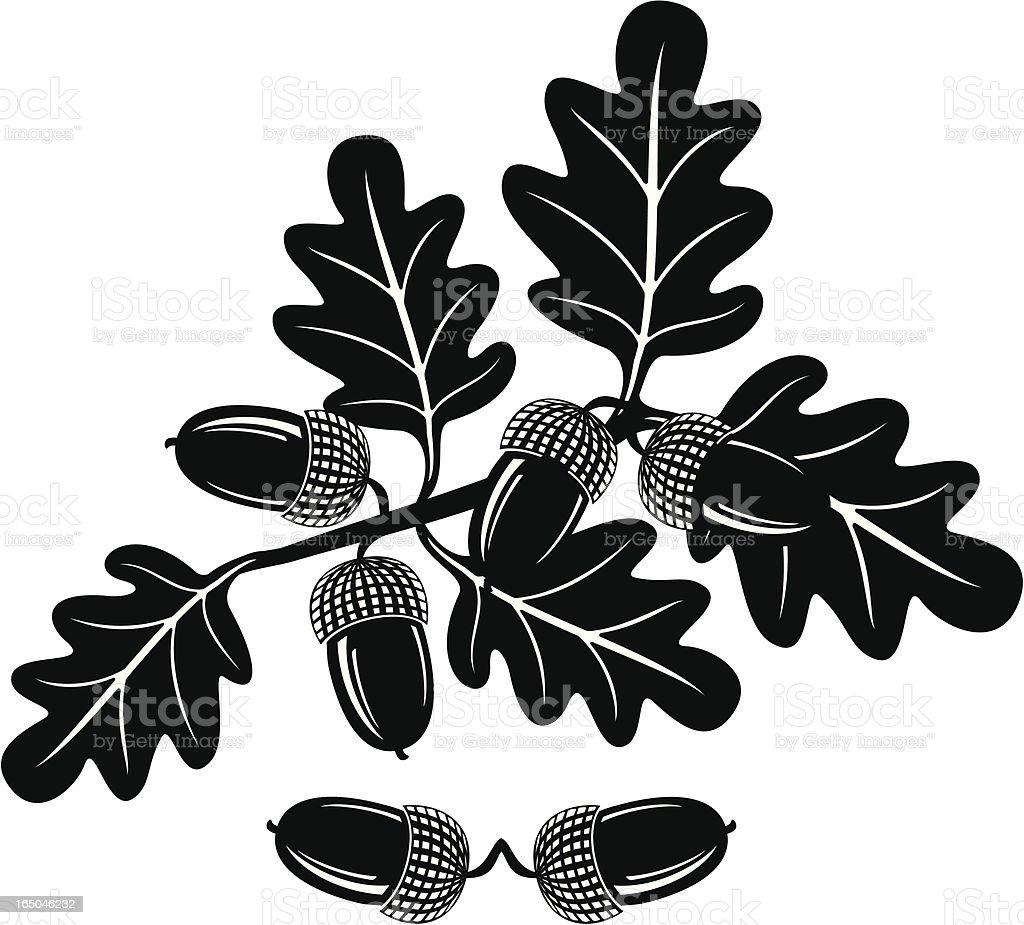 Seeds leaves of an oak vector art illustration