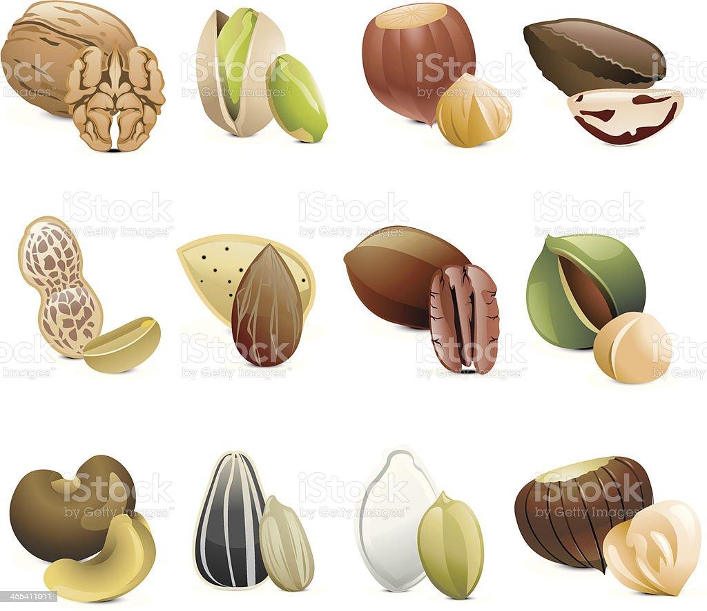Seeds & Nuts vector art illustration