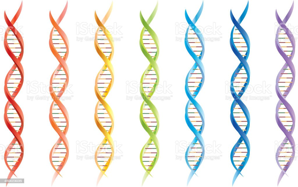 DNA segments vector art illustration