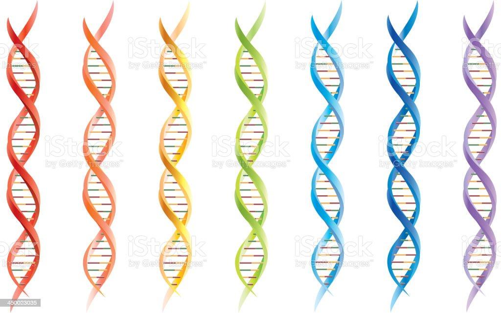 DNA segments vector art illustration