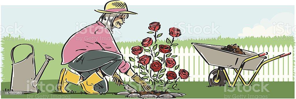 Senior Woman Planting Roses royalty-free stock vector art