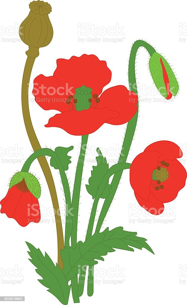 Separate elements flowers red poppy: flowers, leaves, bolls, buds vector art illustration