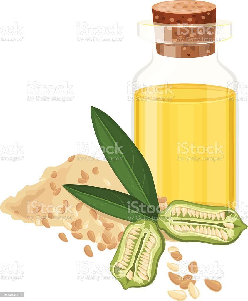 Sesame Oil, Seeds, Fruit, leaves, Vector illustration vector art illustration
