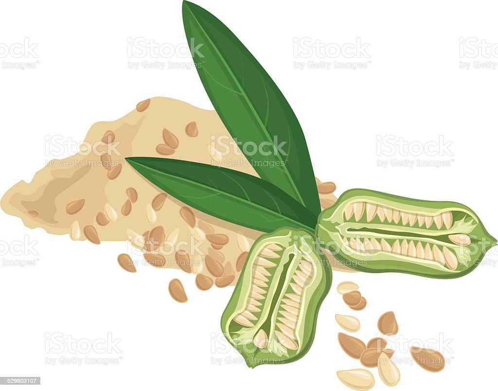 Sesame Seeds, Fruit, leaves, Vector illustration vector art illustration