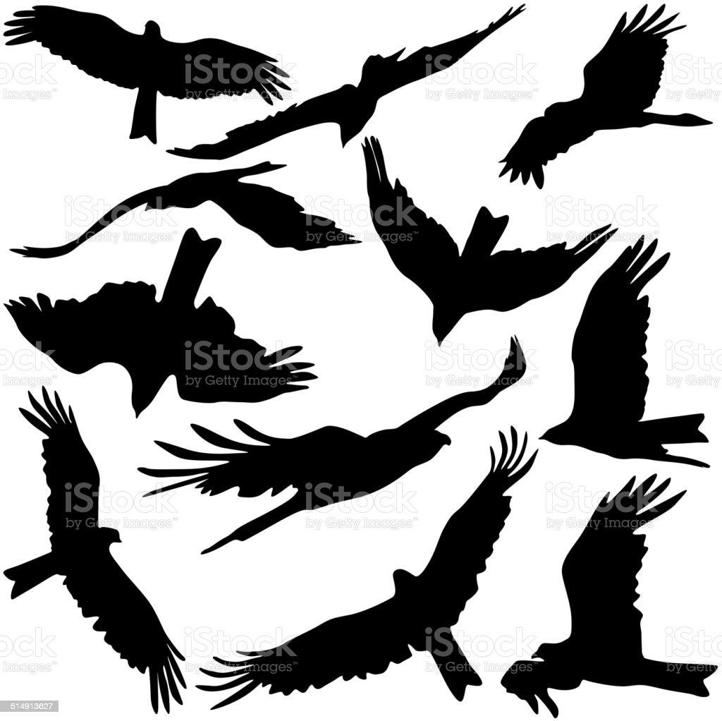 Set black silhouettes of prey eagles vector art illustration