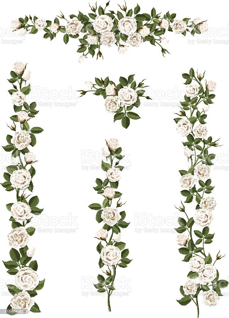 set brushes flowers climbing white roses vector art illustration