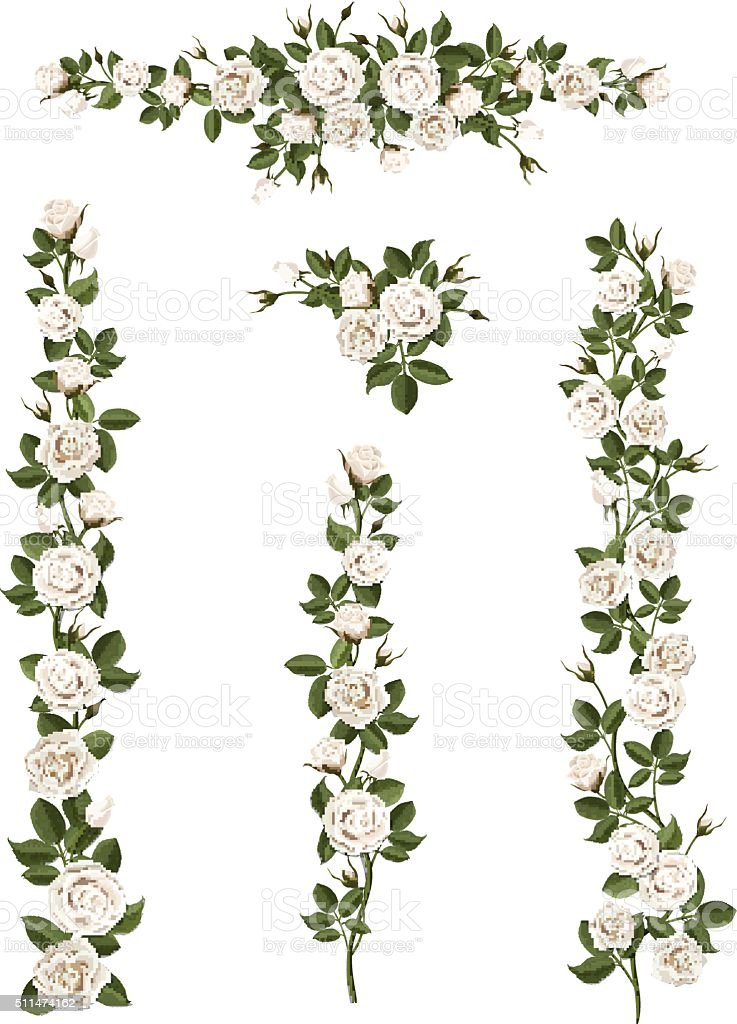 set brushes flowers climbing white roses vector art illustration