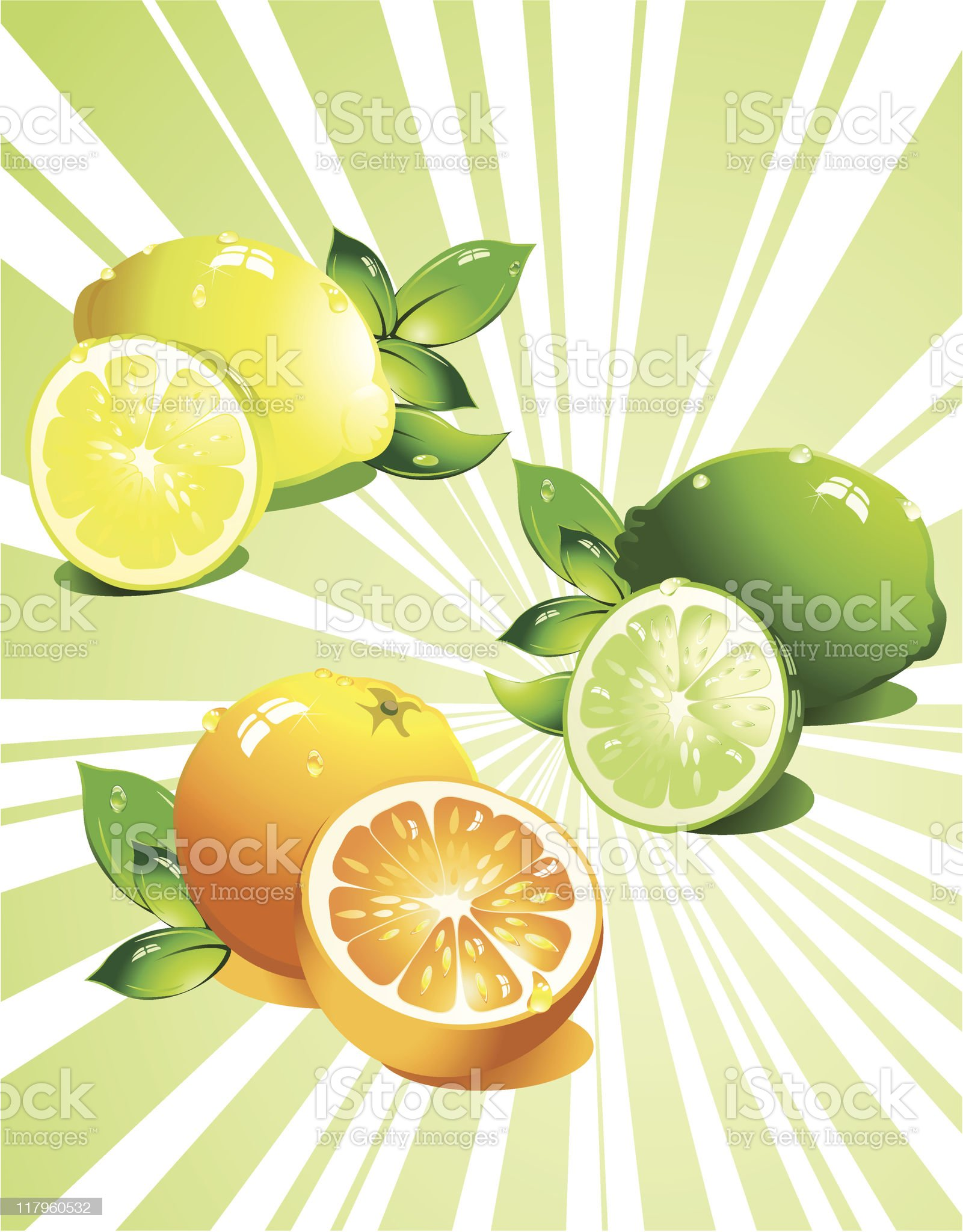 Set citrus fruit. Vector royalty-free stock vector art
