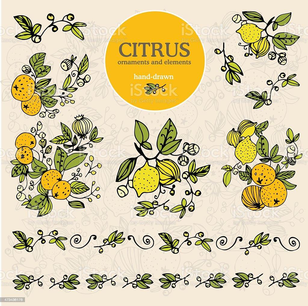 set citrus ornament and elements lemon hand draw vector art illustration
