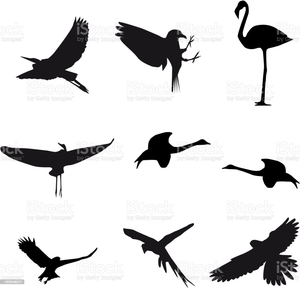 Set different photographs of birds isolated on white background royalty-free stock vector art