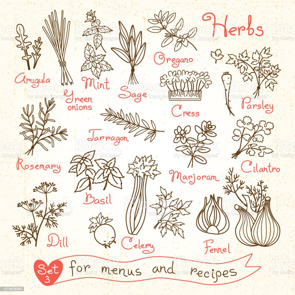 Set drawings of herbs for design menus, recipes and packages vector art illustration