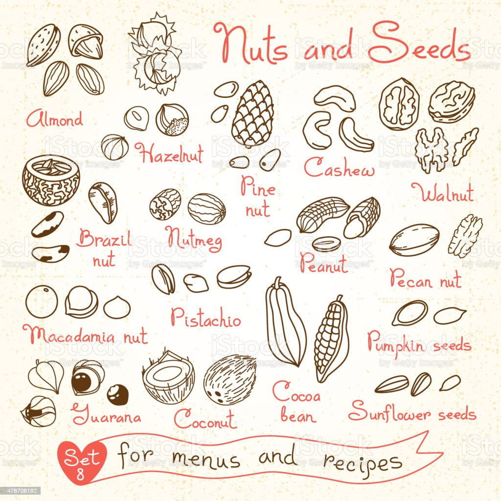 Set drawings of nuts and seeds for design menus, recipes vector art illustration