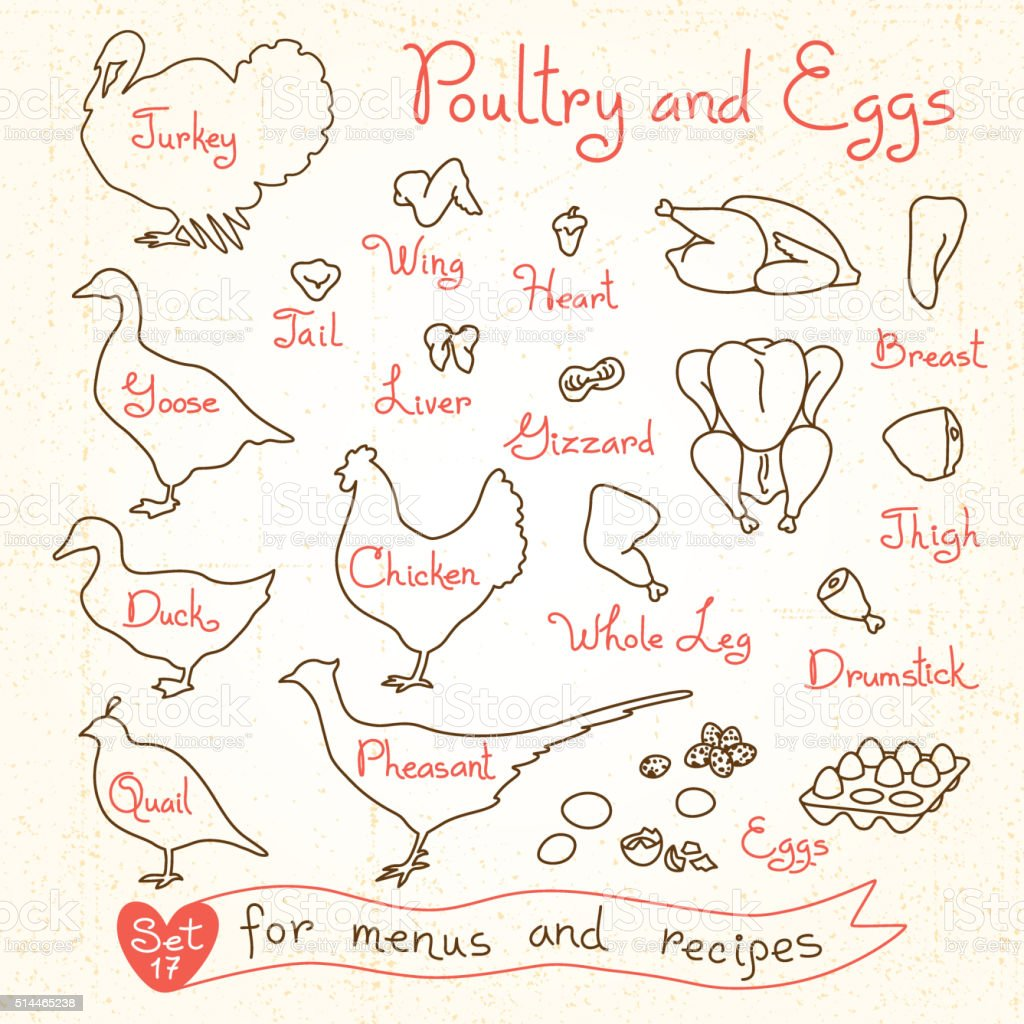 Set drawings of poultry and egg for design menus, recipes vector art illustration