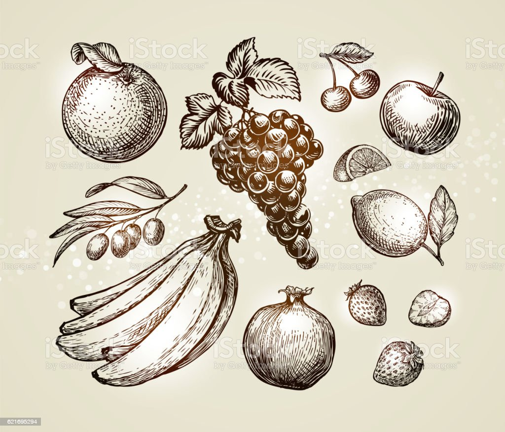 Set food sketch. Hand-drawn fruits such as grape, cherry vector art illustration