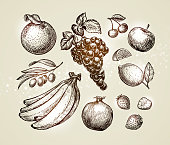 Set food sketch. Hand-drawn fruits such as grape, cherry