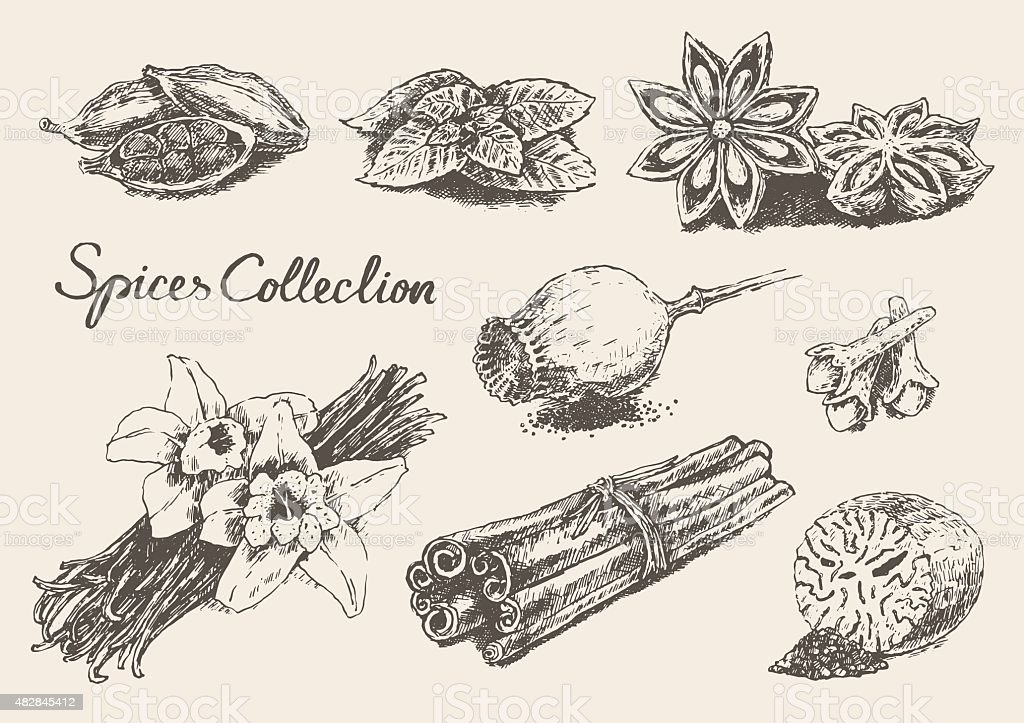 Set hand drawn spices and herb collection Vector vector art illustration