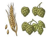 Set hop herb plants with leaf and Ear of barley.