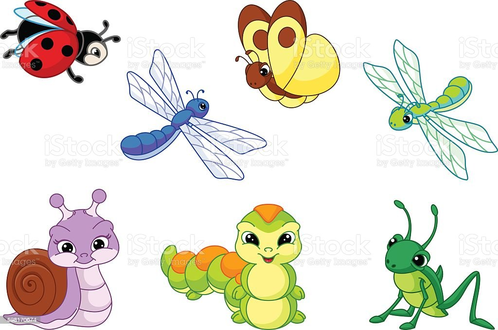 Set Insect vector art illustration