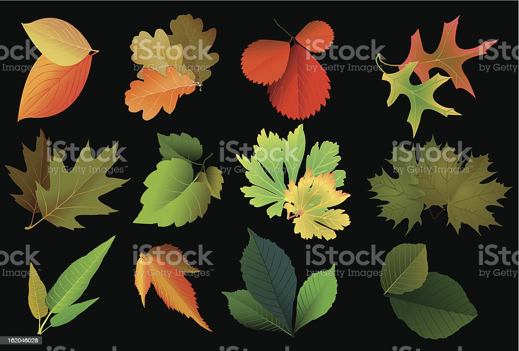 Set leaves of different trees royalty-free stock vector art