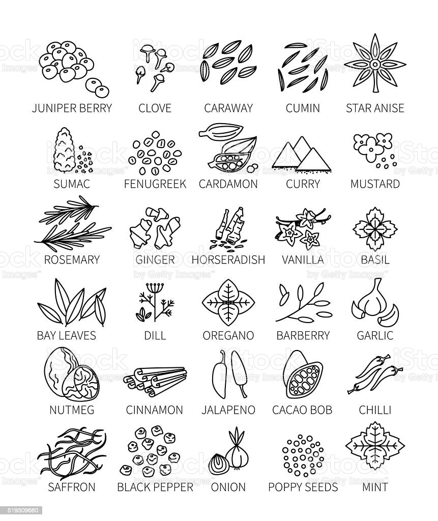 Set linear spice. vector art illustration