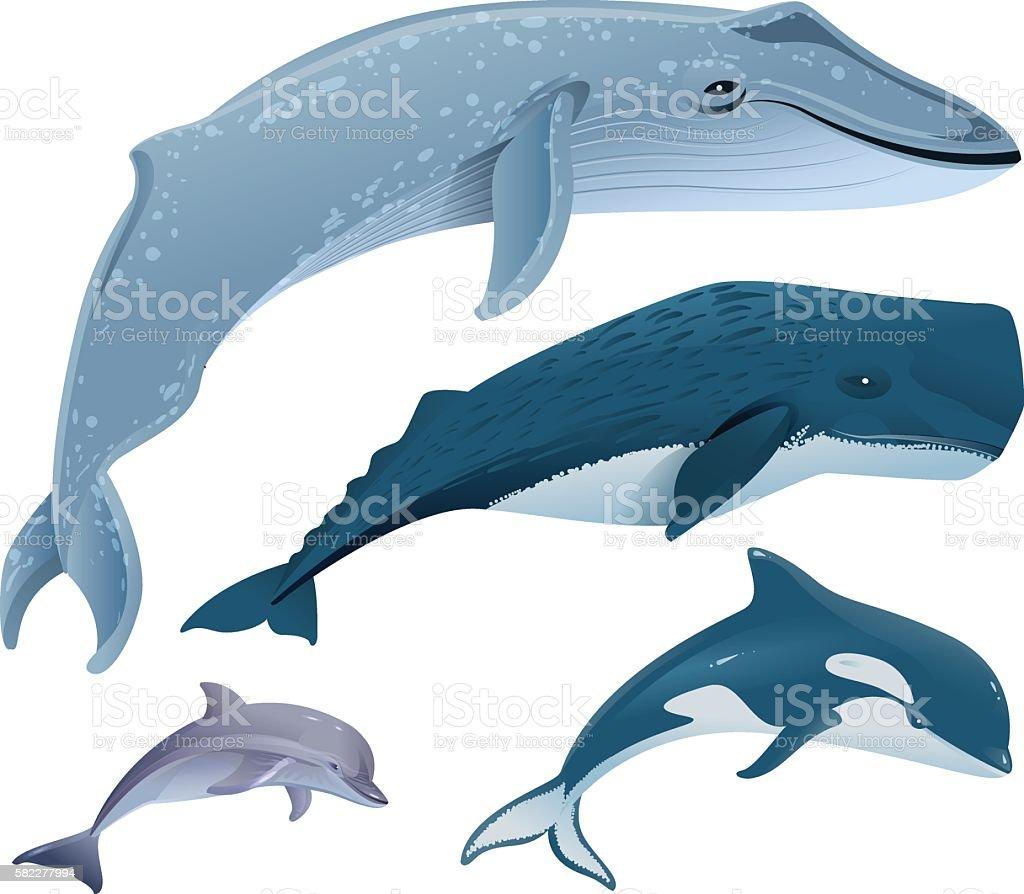 Set marine mammals. Blue whale, sperm whale, dolphin, orca vector art illustration