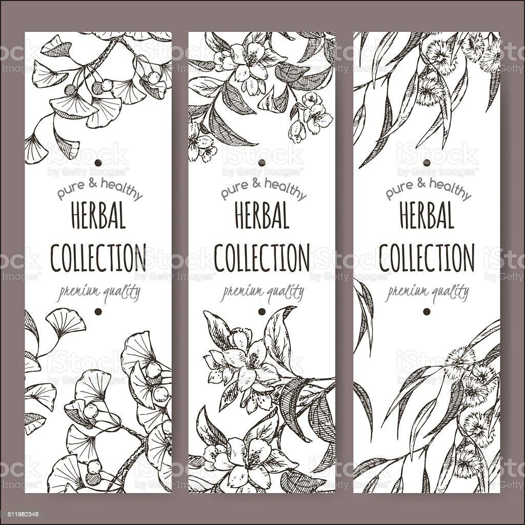 Set of 3 vector labels with Ginkgo biloba, jasmine, eucalyptus vector art illustration