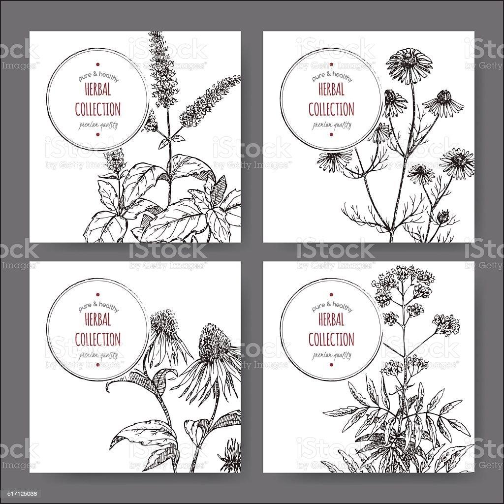 Set of 4 vector herbal tea labels vector art illustration