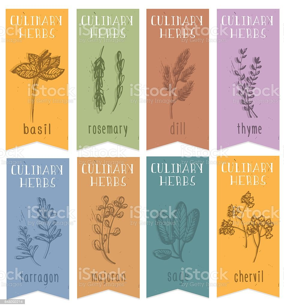 Set of 8 herbal labels on hand drawn sketch. vector art illustration
