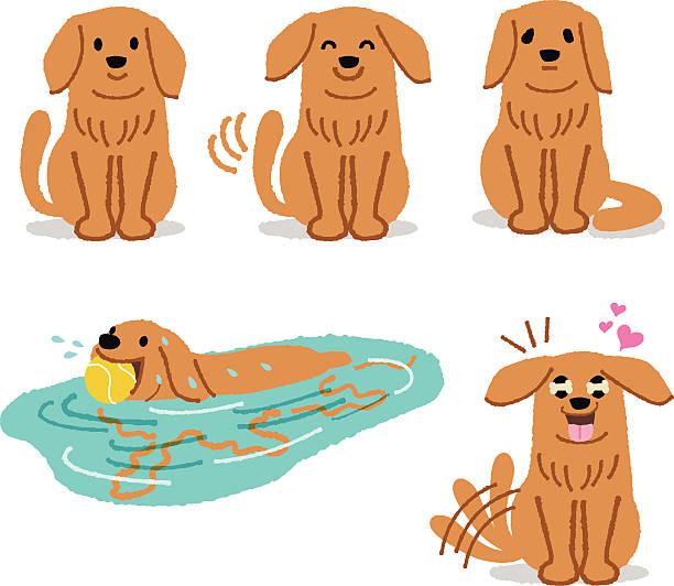 Golden Retriever Sad Clip Art, Vector Images & Illustrations