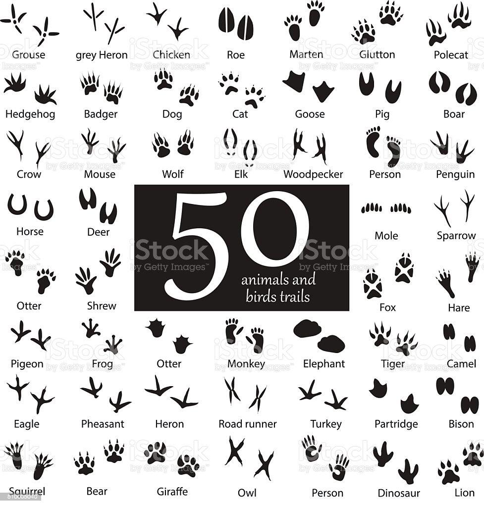 Set of Animal and Bird Trails vector art illustration