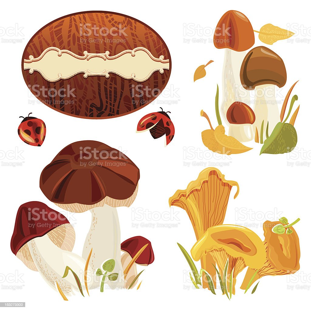 Set of Autumn Forest Mushrooms royalty-free stock vector art
