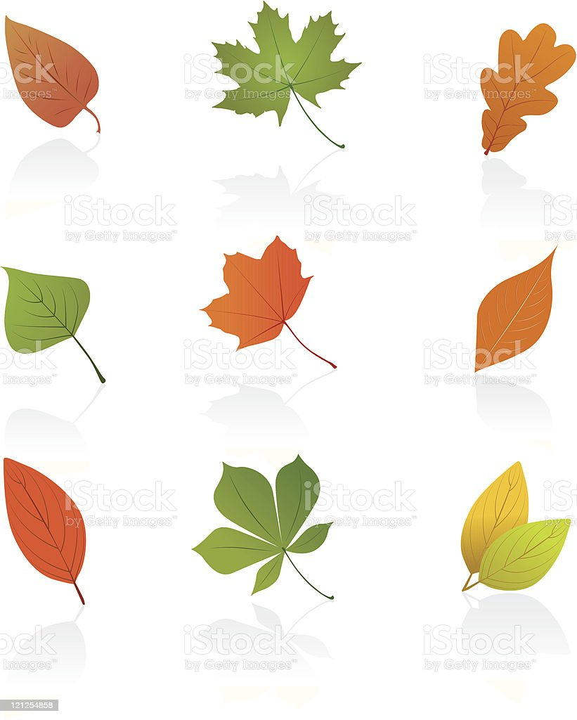 Set of autumn leafs royalty-free stock vector art