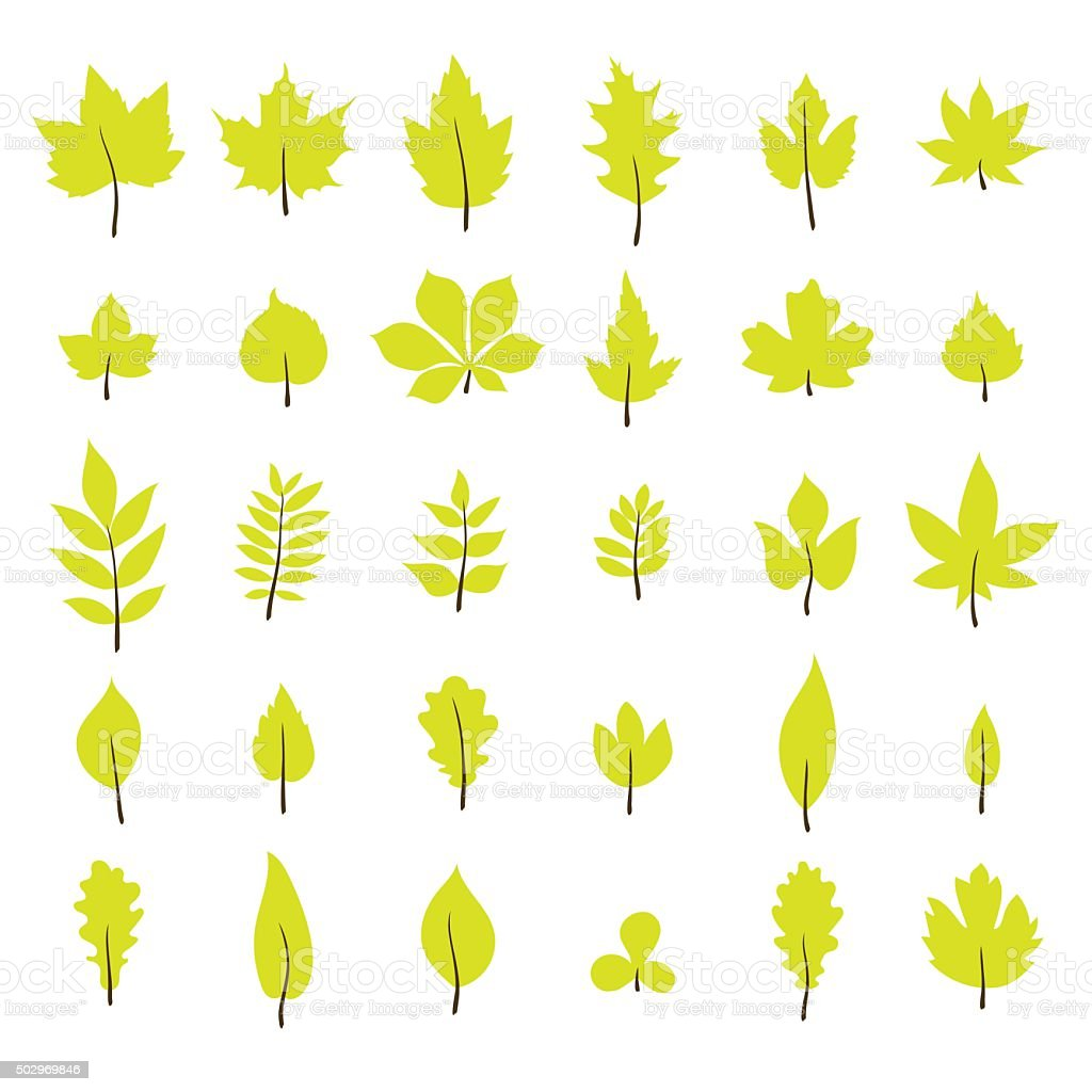 Set of autumn leaves. Leaf collection in flat style vector art illustration