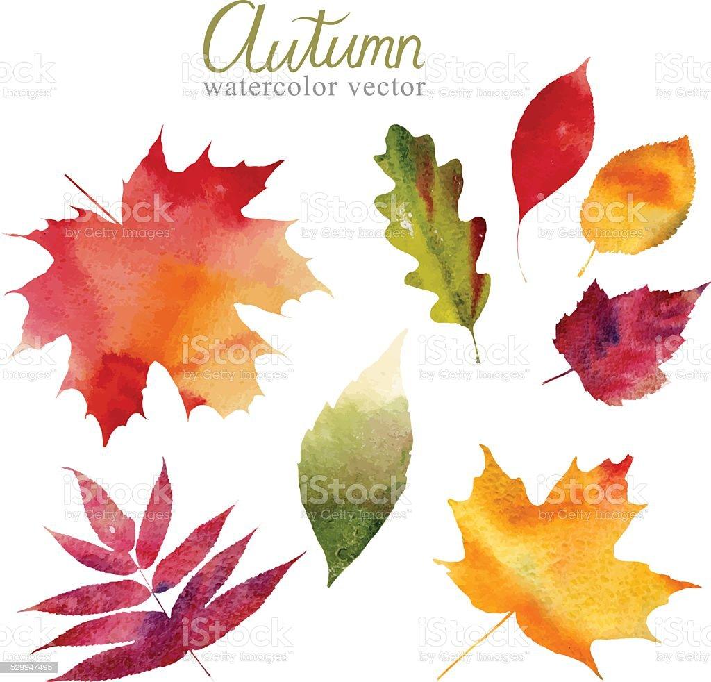 Set of autumn leaves vector vector art illustration