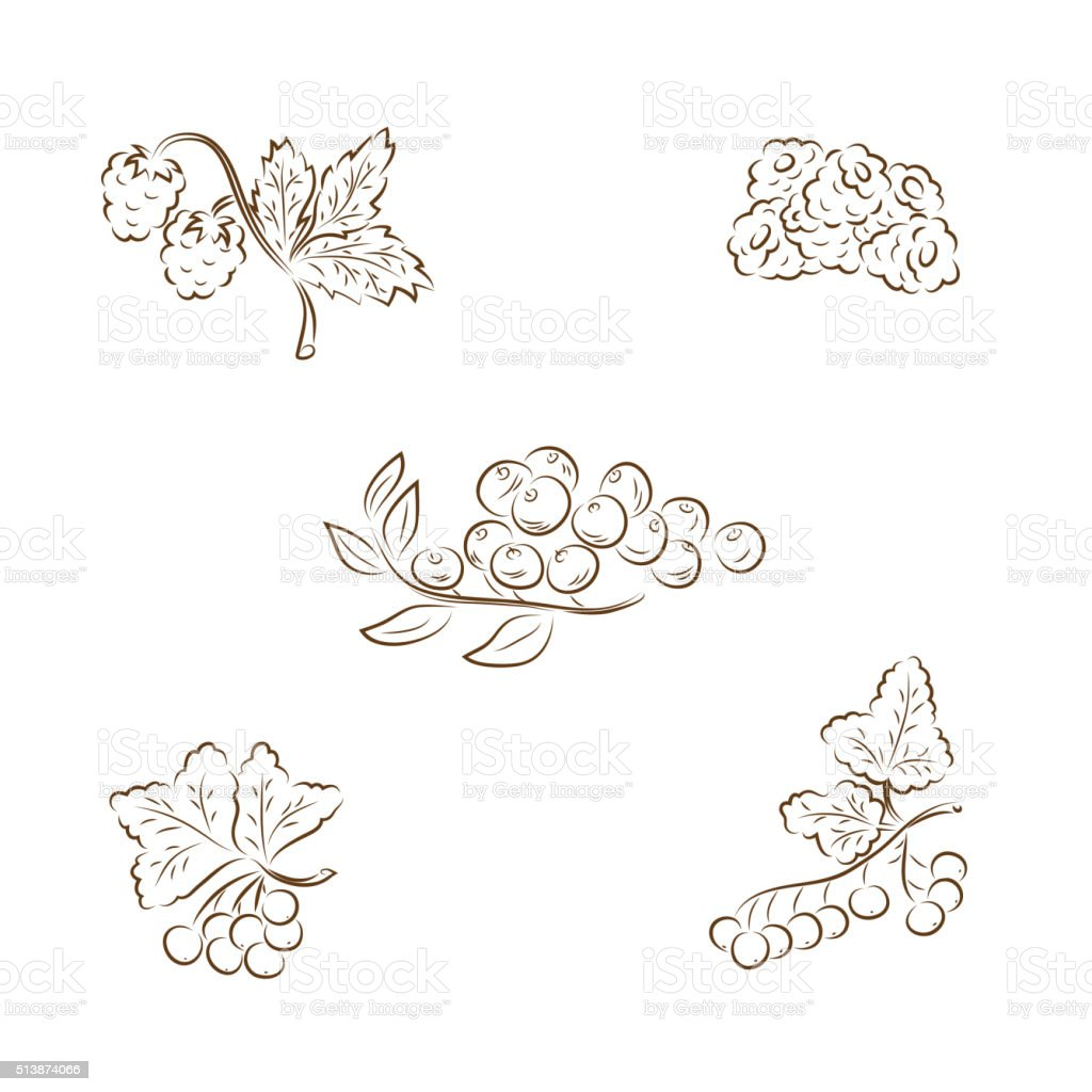 Set of berries: raspberries, blackberries, blueberries, red currants, black currants vector art illustration