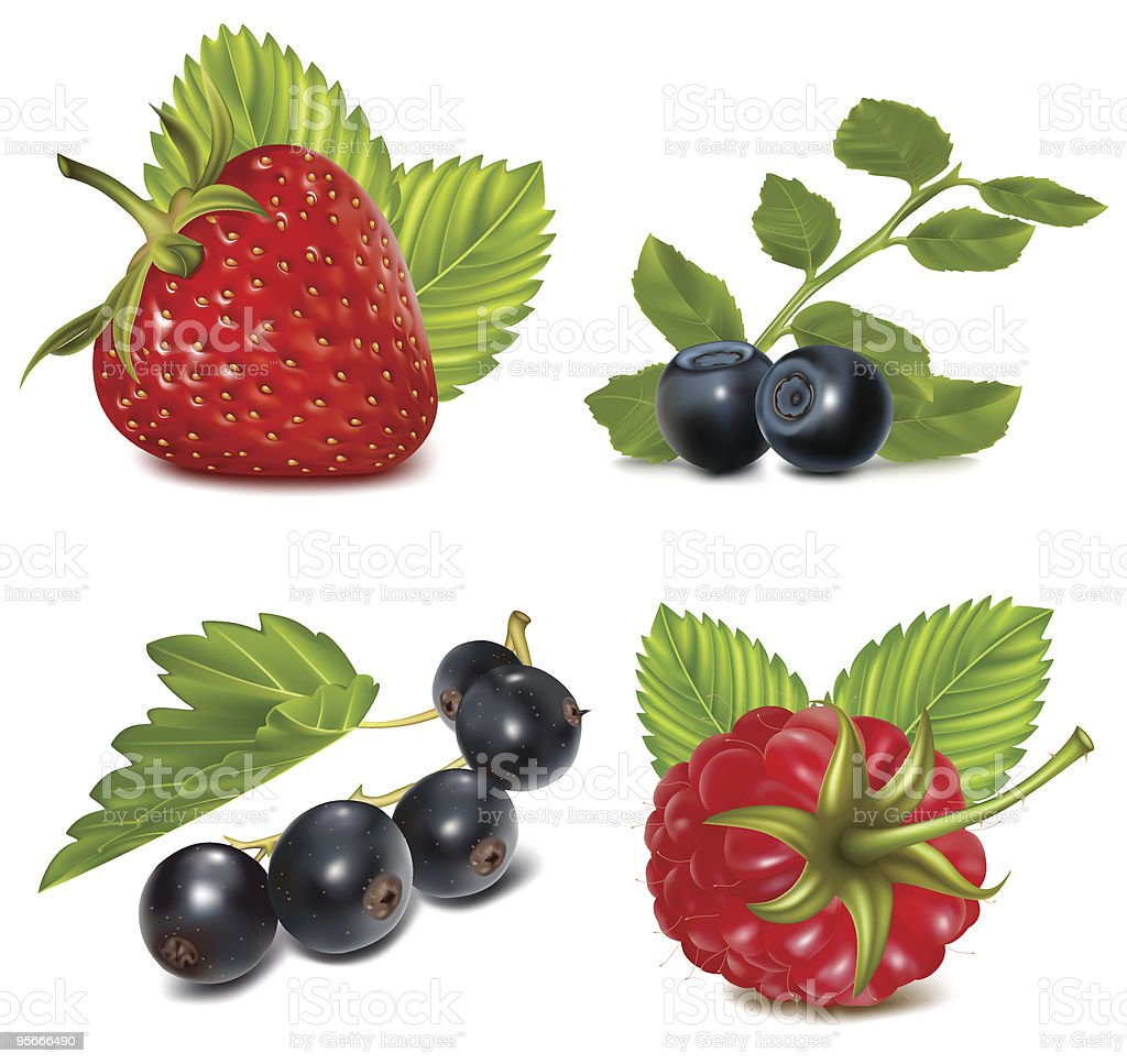 Set of berries with leaves. royalty-free stock vector art
