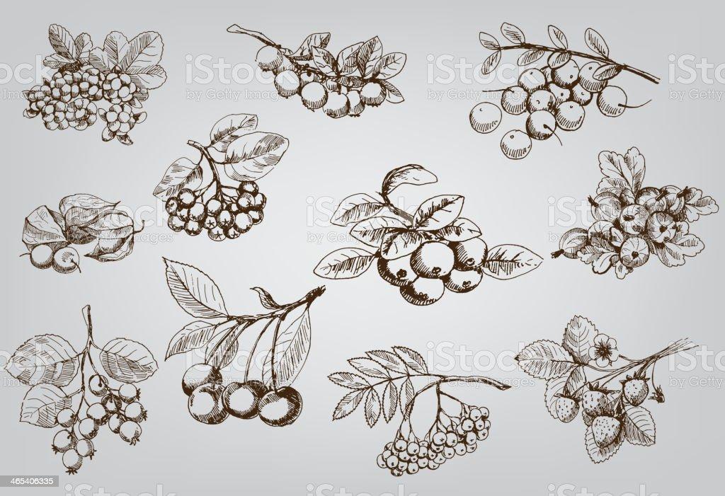 set of berry vector art illustration