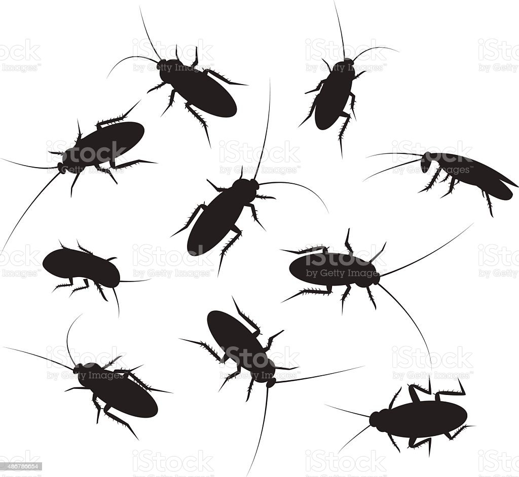 Set of black silhouette cockroach with detail, isolated on white vector art illustration
