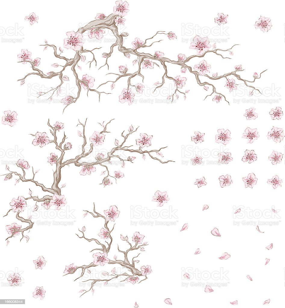 Set of bloom cherry vector art illustration