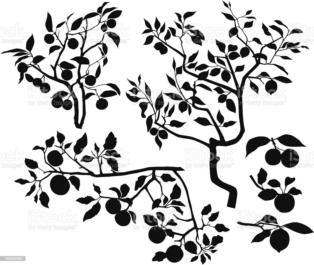 Set of branches with fruits vector art illustration
