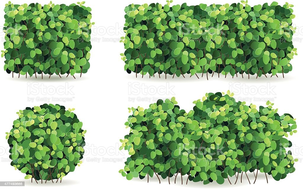 Set of bushes with green leaves of different shapes. vector art illustration